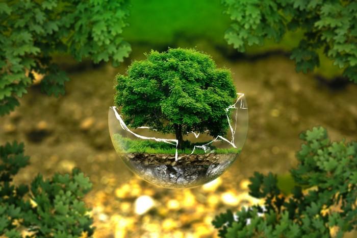 Dubai et écologie